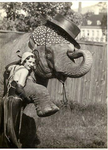 Circus Girl with the Elephant