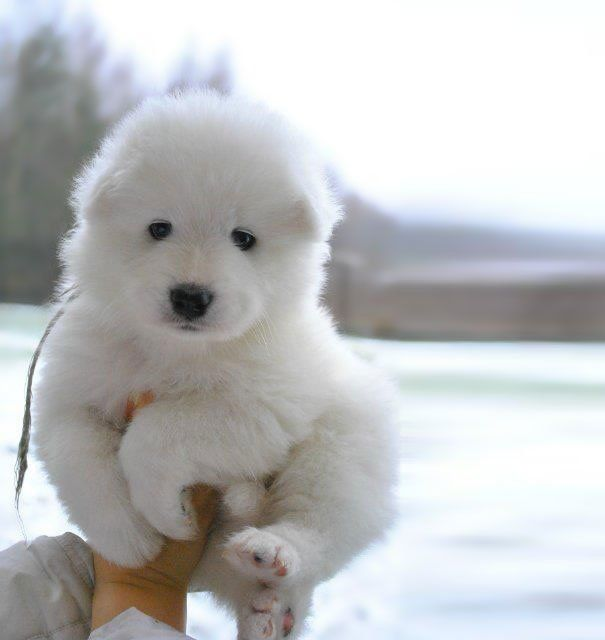 20 Cãezinhos tão fofos que mais parecem ursinhos de pelúcia