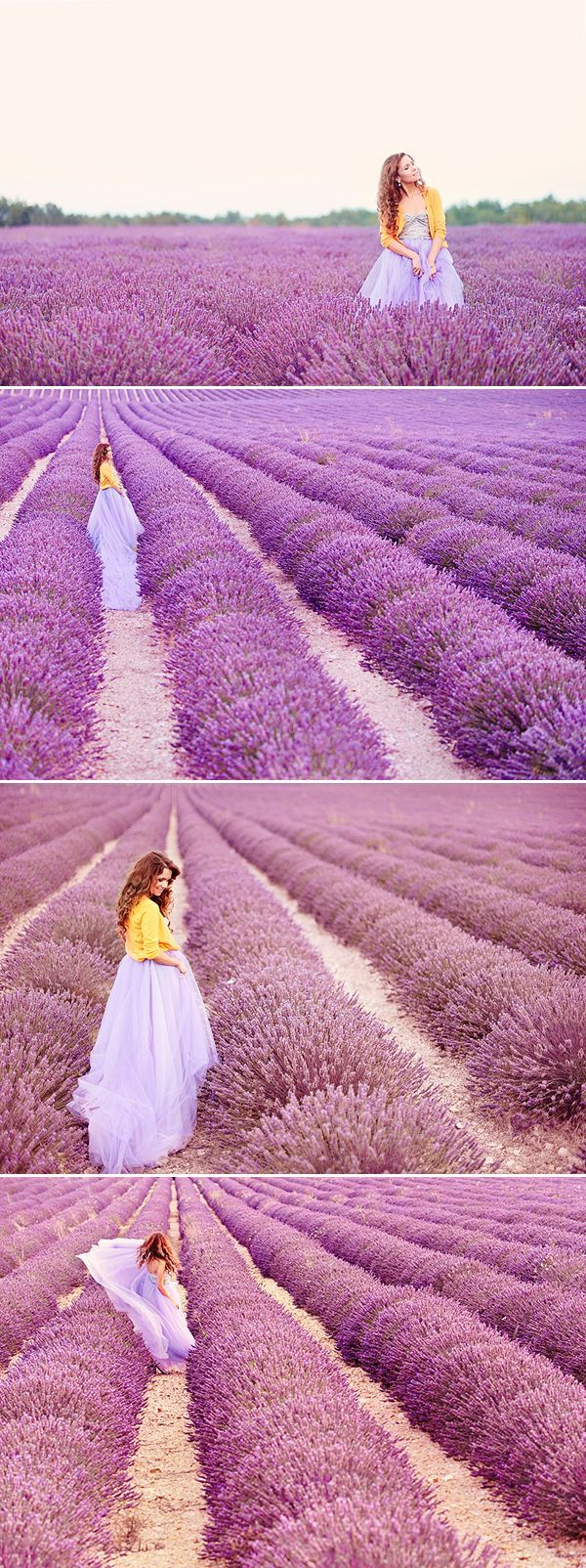 lavanda flowers free - Google Search