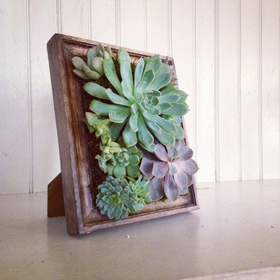 Vertical Succulent Planter Garden by VerticalFlora on Etsy,