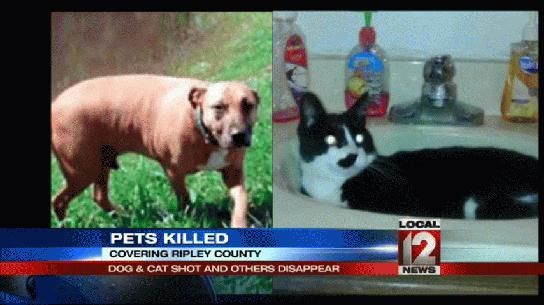 Dog and cat shot, others disappear -  Local 12 WKRC-TV Cincinnati - News - Top Stories