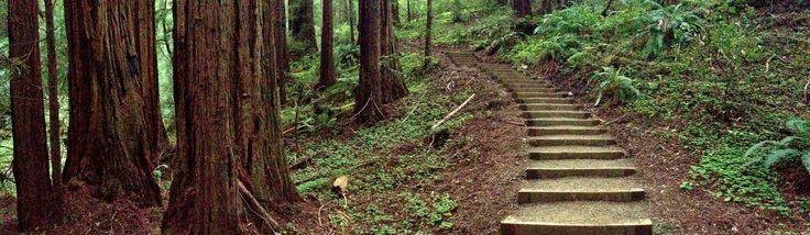 David J Turlington || Image source: https://cdn.hikingguy.com/wp-content/uploads/find-a-hiking-trail.jpg