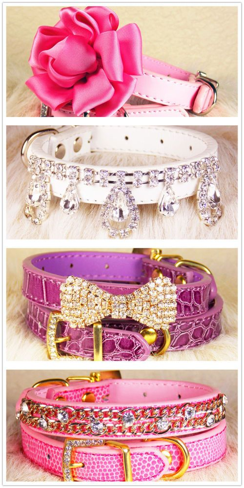 New Croc Crocodile Style Personalized  Pet Dog Cat Collar  M, S, XS | Pet Supplies, Dog Supplies, Collars | eBay!