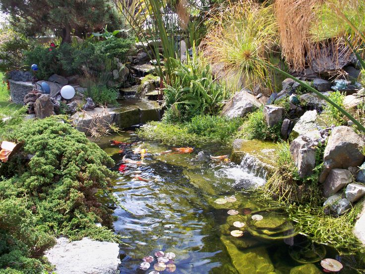 58 best Water Gardens images on Pinterest Water garden Garden