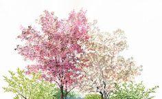Blut-Pflaume (2. v. links) und Felsenbirne (3. v. links) bilden mit ihrem kupferroten Laubaustrieb und ihren leuchtend rosafarbenen beziehungsweise weißen Blüten eine prächtige Kulisse für die Zwiebelblumen, die im April und Mai zur Blüte kommen