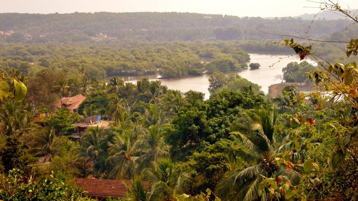 A view down to the river from Wildflower Villas, north Goa. To book or enquire: https://www.tripzuki.com/hotels/vivenda-dos-palhacos-goa/