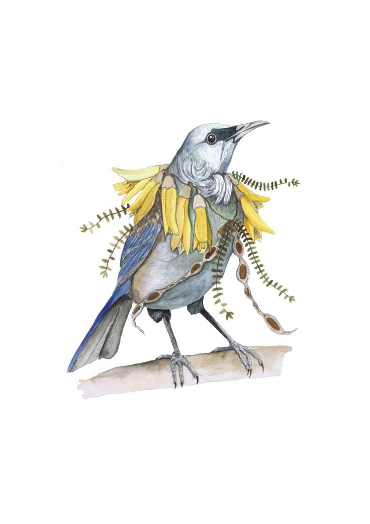 Tui  Birds in flowers art print by CarisseEnderwick on Etsy, $40.00