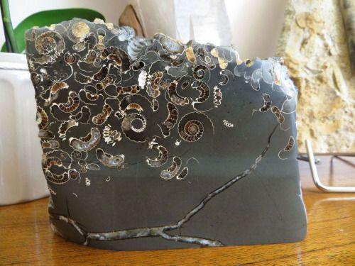 """sixpenceee: """"Ezek fosszíliák ágyazva egy darab márvány.  (Forrás) """""""