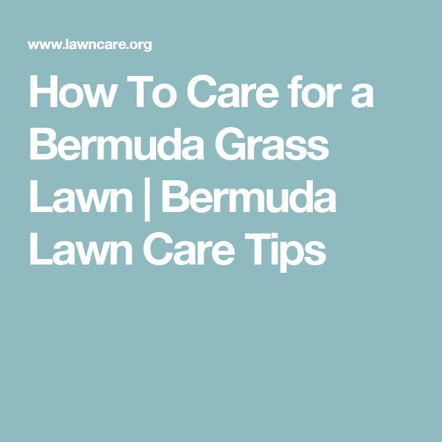 How To Care for a Bermuda Grass Lawn   Bermuda Lawn Care Tips