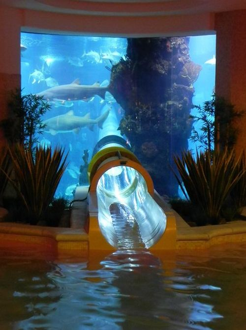 You may not be ready to swim with the sharks, but how about swimming by them in a tubular glass slide? This crazy slide is designed to take you through the shark infested aquarium at the Golden Nugget Hotel in Las Vegas.