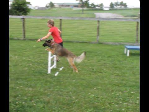Beginner Dog Agility Training - YouTube