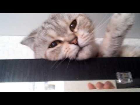 кошка эндуриста - YouTube