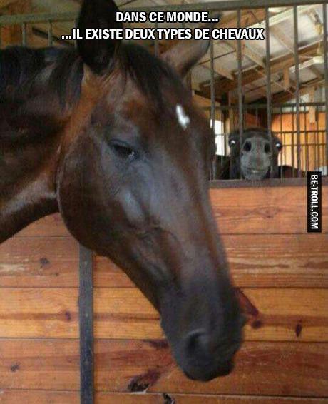 Dans ce monde il existe deux types de chevaux...