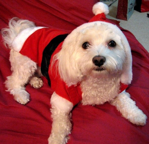 Dog Christmas Outfits Dog Santa Suits