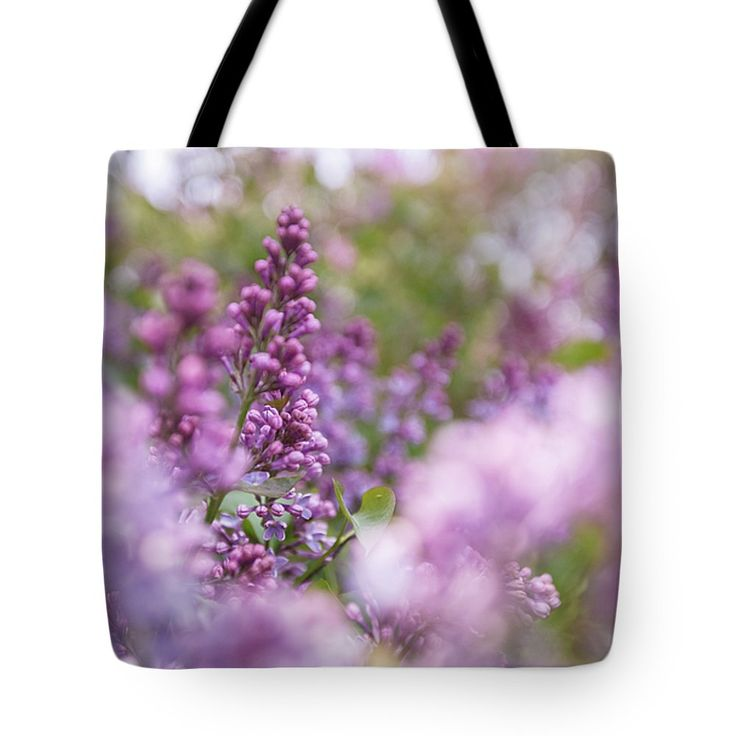 #AnnaMatveeva #Purple #Flowers #Lilac #ToteBags #FineArtAmerica #FineArtPrints #ForSale #Artdecor #Decor #Homedecor #Nature http://anna-matveeva.pixels.com