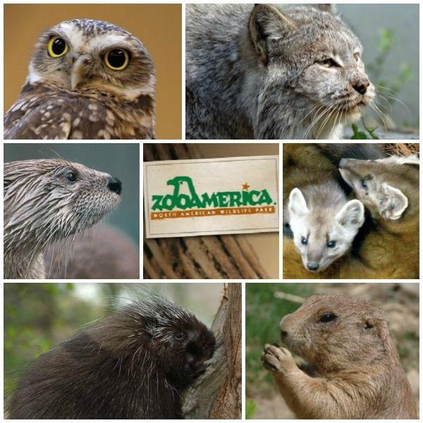 Hershey, Pennsylvania Zoo America