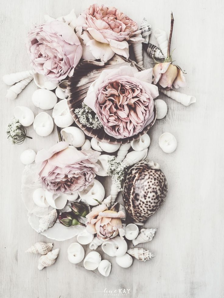 Vignette with faded flowers and shells