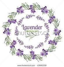 Image result for lavandula angustifolia botanical illustration
