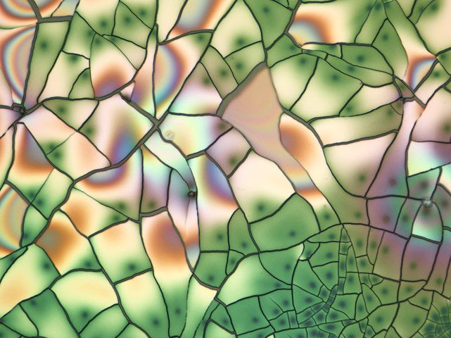 A 50-times magnified view of crystals of solgel chemical. Solgel is a widely used process in material science and ceramic engineering.  Image by Marc Van Hove, Centexbel.