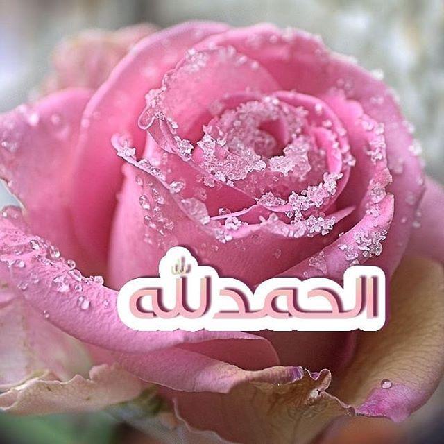 Pin By Hoda On الحمدلله Flowers Rose Duaa Islam