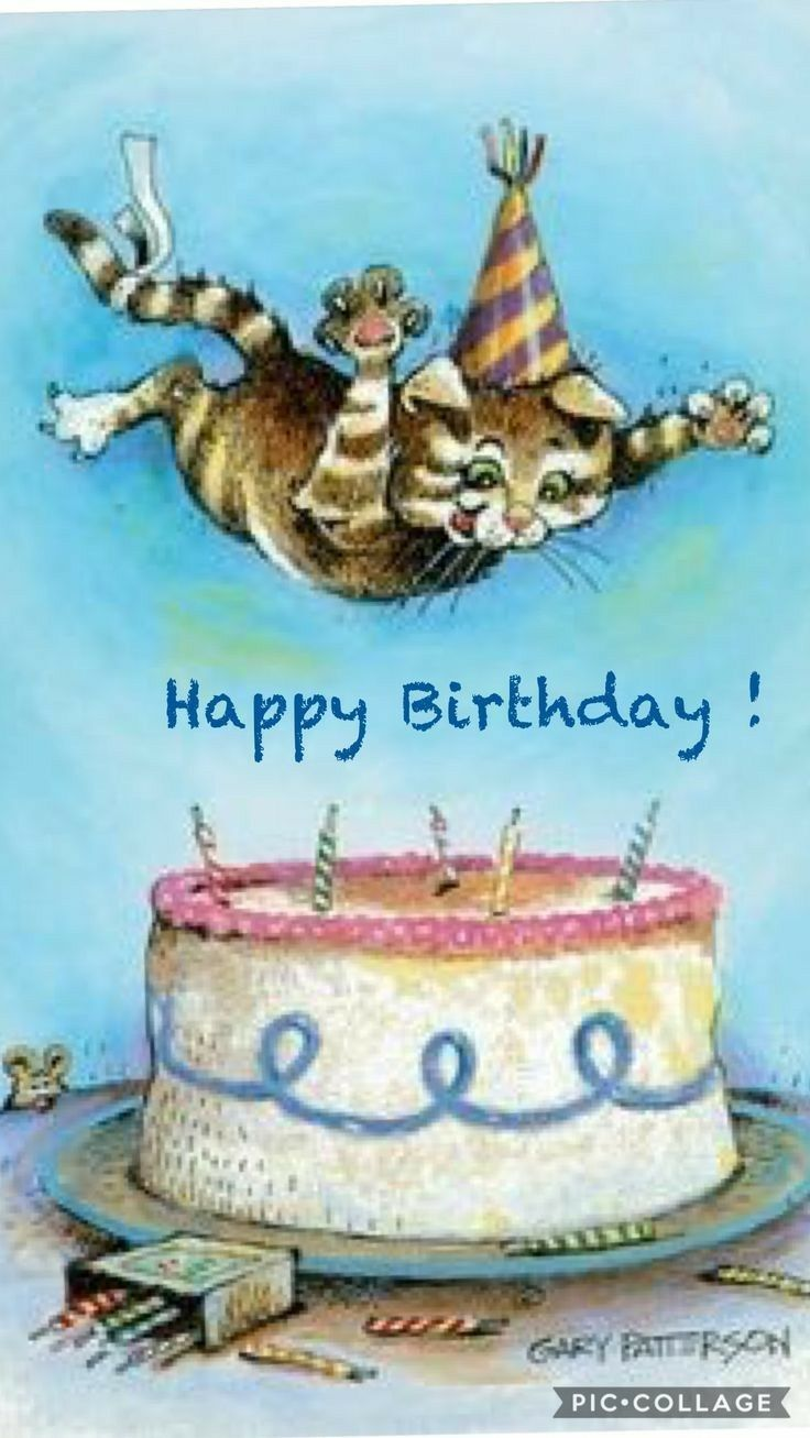 Happy bday cat