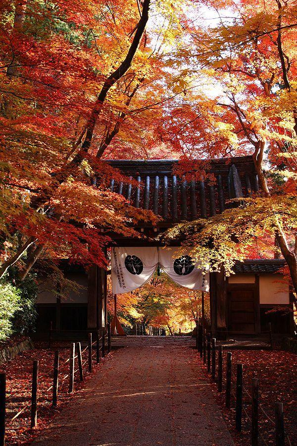 京都 総本山 光明寺:Komyo-ji temple, Kyoto, Japan: photo by 92san