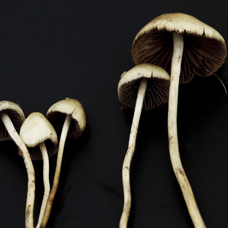 Researchers found that a session with psilocybin in a therapeutic setting helped demoralized cancer patients find meaning in life again.