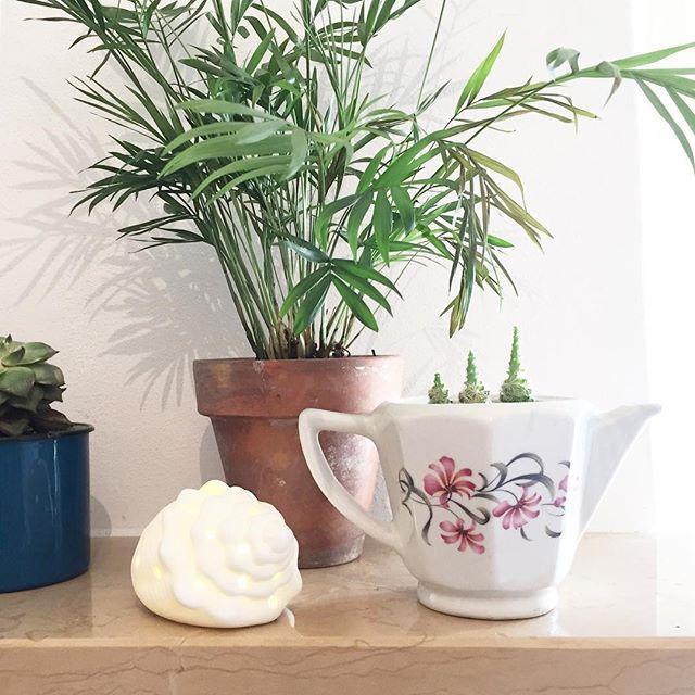 HOME| Obiettivo di Ferragosto: assaggiare la torta al cocco di mamma🍰! Qual è il tuo?
