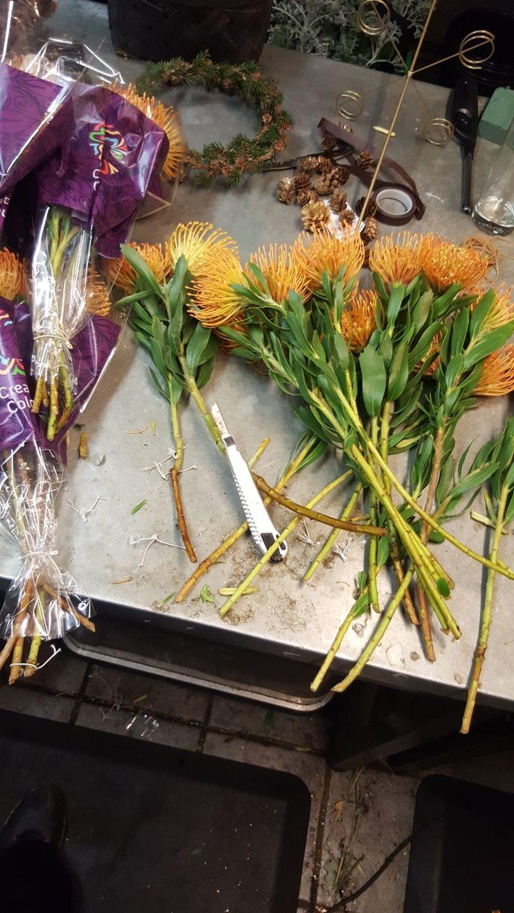 Ons 25. Okt 1. Jeg pakket inn bunter på tre og tre Leuco Spermum. 2. Satte sammen tre og tre og pakket inn i selofan. 3. Leuco Spermum (som betyr hvite frø på Norsk), selofan, stikk, teip. 4. Det gikk bra å pakke inn blomstene. 5. Jeg har lært hva navnet betyr. 6. Jeg kunne plassert blomstene litt bedre. De ble stående litt på rad i noen av buntene.