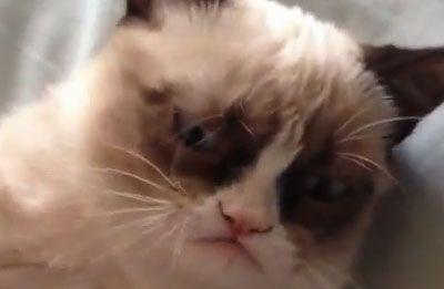 Fofura do Dia: o gatinho mal humorado… E lindo!