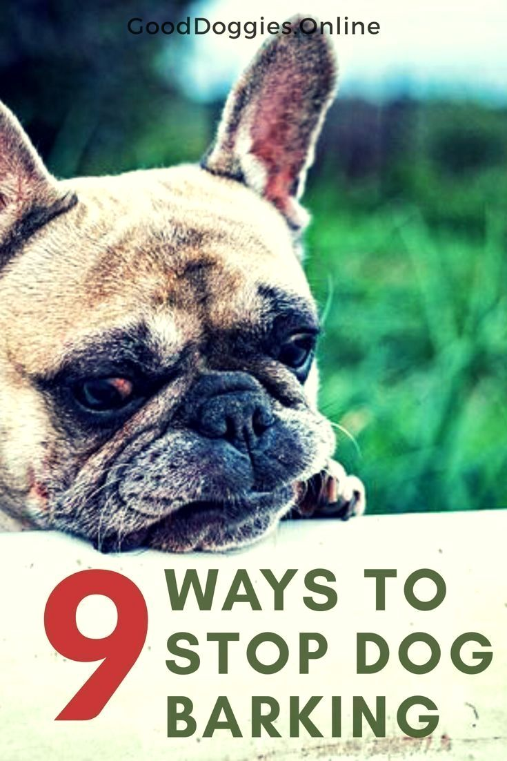 Basic Dog Training Click The Pic For Lots Of Dog Care And