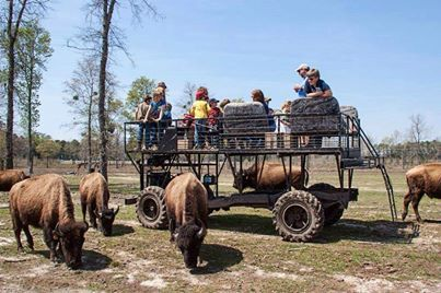 133 Best Images About Best Daytrips From Savannah On Pinterest