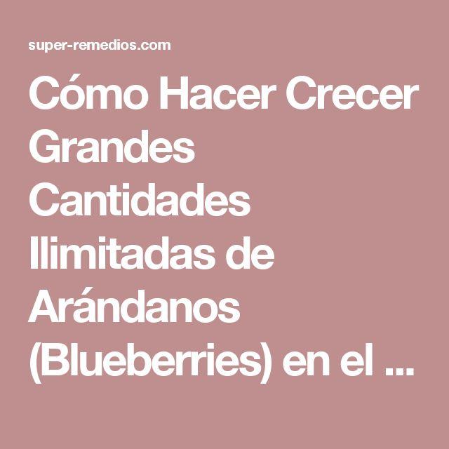 Cómo Hacer Crecer Grandes Cantidades Ilimitadas de Arándanos (Blueberries) en el Patio Trasero de su Casa! – Super Remedios