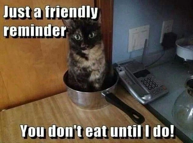 Just A Friendly Reminder, You Don't Eat Until I Do