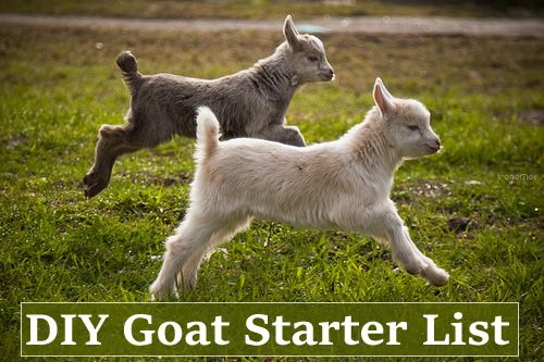 DIY Goat Starter List - everything you need to get started to be successful…