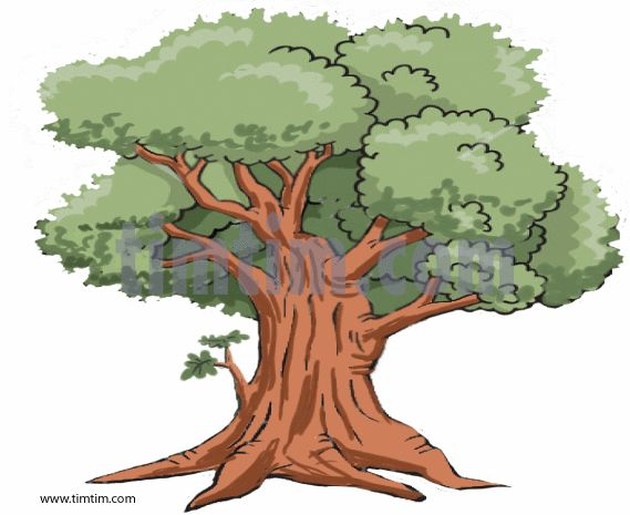 Realistic Tree Drawing Coloring Free Online Drawing Tool Free Drawings At Timtim Com Tree Drawing Oak Tree Drawings Cartoon Trees If you see any issues please send us an email. realistic tree drawing coloring