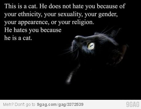 Because.Cat Hate, Laugh, Quote, So True, Funny Stuff, Humor, Things, Kitty, Animal