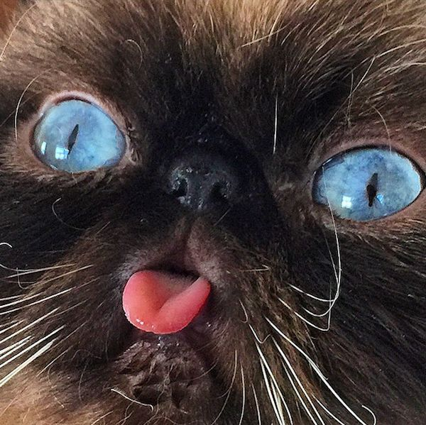 """Pix We Love: Der the Cat Might Be """"America's Next Cat Star"""" 