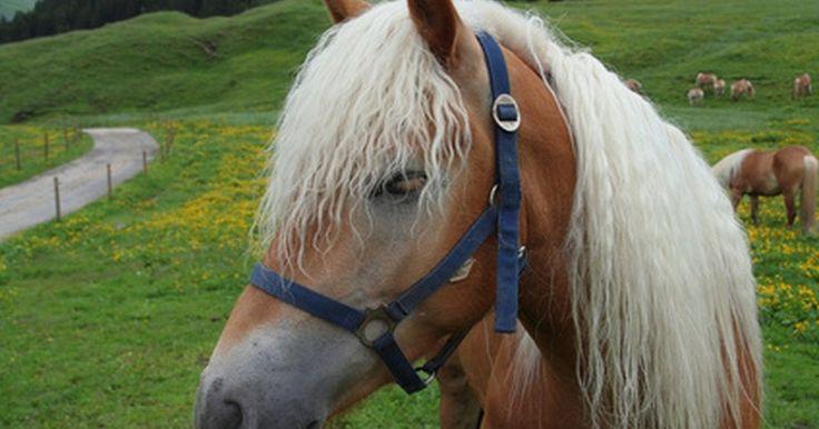 Cómo hacer pulseras de pelo de caballo. Las pulseras de pelo de caballo son piezas de joyería artesanales que datan de tiempos antiguos. Al crear una pulsera de pelo de caballo cuidadosamente trenzada, tendrás una pieza de joyería que no sólo está hecha a medida sino que además es un símbolo del vínculo entre tú y tu caballo. Para hacer una de estas pulseras sólo se necesitas seguir ...