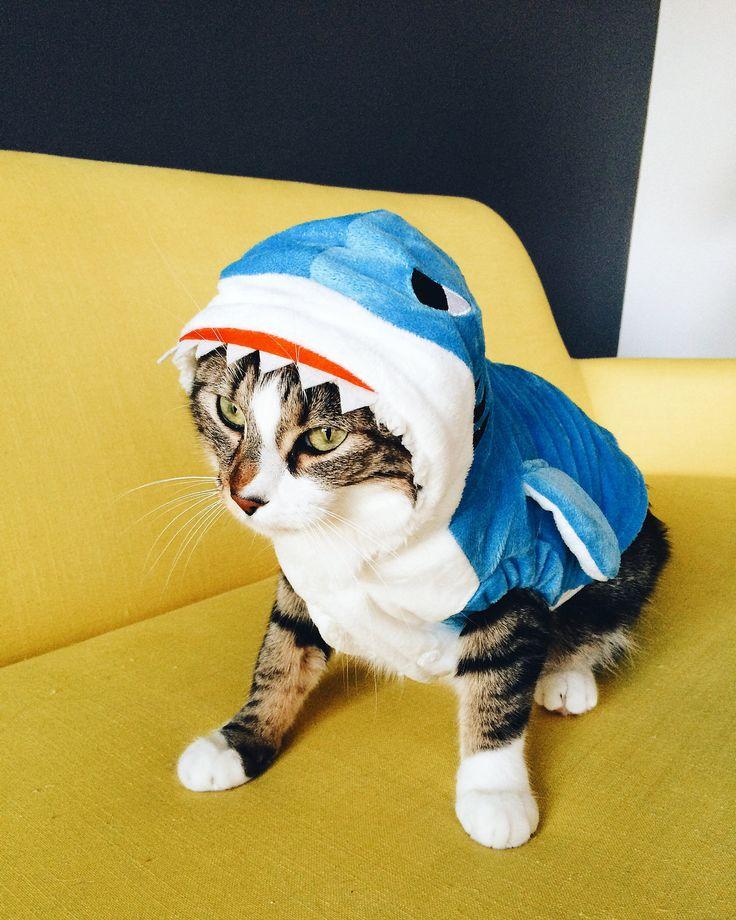 costume de requin pour chat
