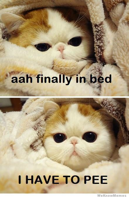 lol so true: Cats, Animals, Time, Bed, So True, Funny Stuff, Humor, Funnies