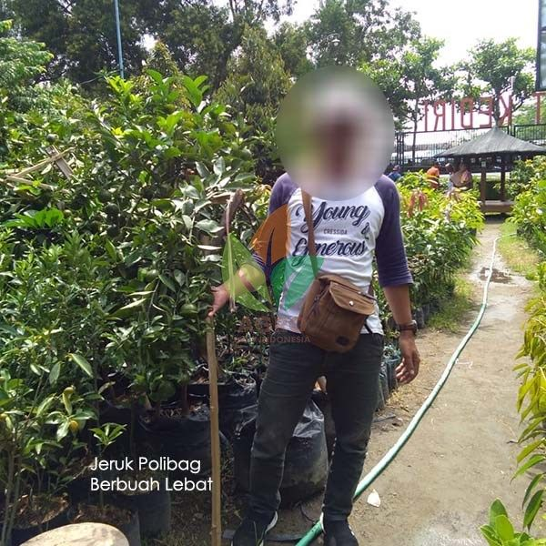 Kebun Kurma Jawa Timur