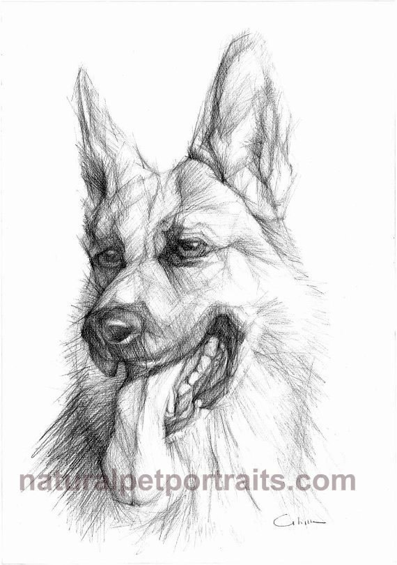 German Shepherd Original Black& White Pencil | Dog Art ...