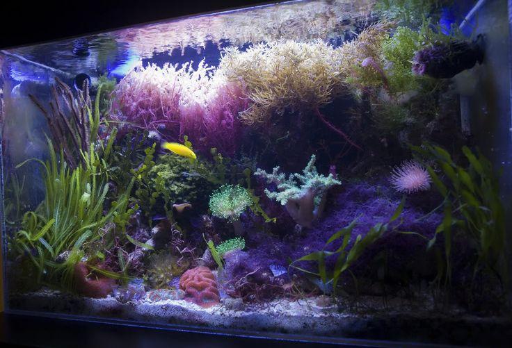 11 best images about macroalgae aquariums on pinterest for Seahorse fish tank