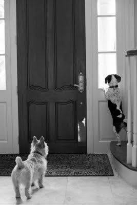 The best feeling in the world...coming home to someone who has been waiting for you to get there...: Excited Dog