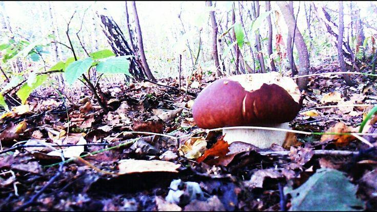 Mushroom (by Maggie00)