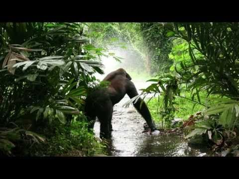 Jungle Sounds For Relaxation - Rainforest Sound ( Monkeys And Birds Ambience ) - YouTube