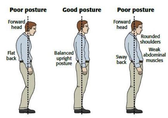 Human-Posture.png 564×399 pixels | Human Posture | Pinterest