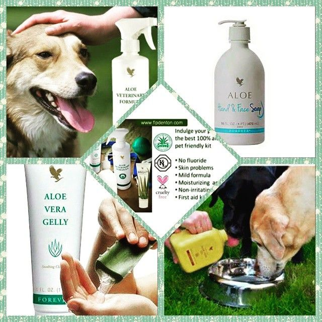 give the best to your loyal companion...www.001002557205.fbo.foreverliving.com