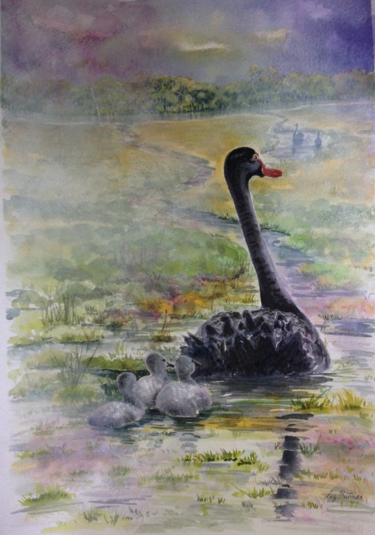 'Black Swan and Cignets' by Liz Butcher